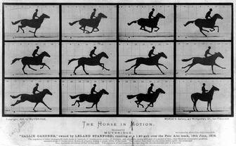 疾走する馬の連続写真