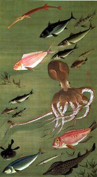 動植綵絵,諸魚図