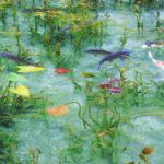 根道神社の池 モネの絵