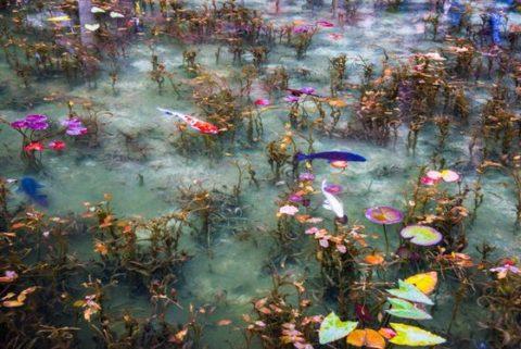 岐阜県,関市,モネの池,見頃